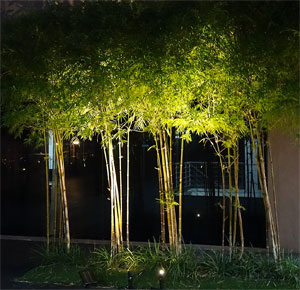 Solar Spot Lights for Trees